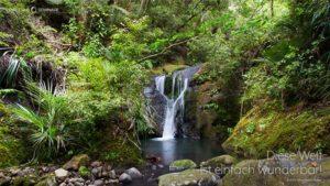 PALLAS-Seminare Desktop Preview - Wasserfall in Coroglen, Neuseeland